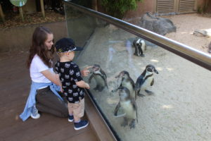 Frugal family days out - two children playing with penguins through a glass barrier