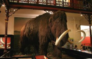 Frugal family days out - A stuffed woolly mammoth